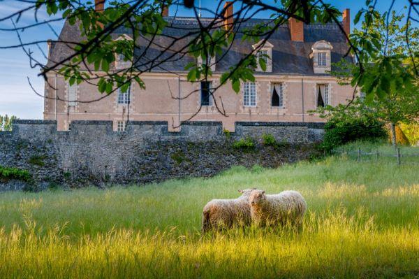 Deux moutons pas loin de la forteresse du chateau